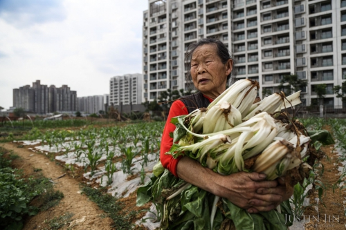 justin-jin-Farmer Wang Mei, 87, grows food in a plot in front of a giant relocation housing project in the southwestern Chinese megapolis of Chengdu..jpg
