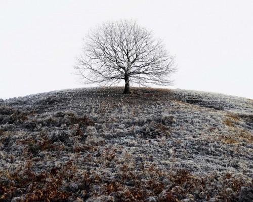 tamas dezso tree-Romaniajpg.jpg