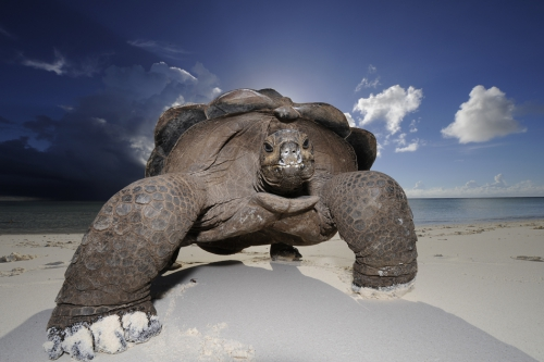 thomas p peschak lost world of aldabra.jpg