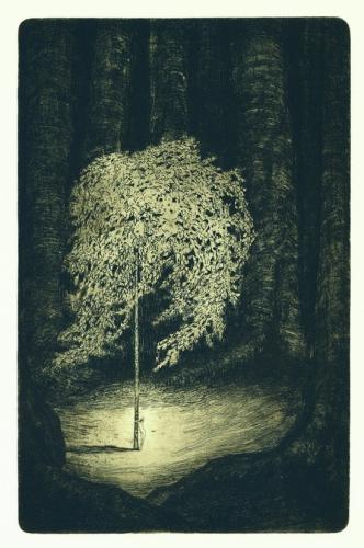 František Drtikol- Untitled ( Tree of live) etching, 1910-20.jpg
