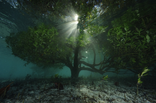thomas p peschak lost world of aldabra 0.jpg