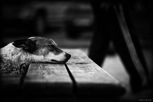 denis buchel dog's life 4.jpg