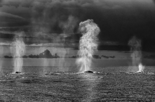 christopher swann-baleines.jpg