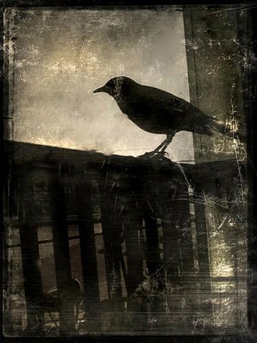 jackbarnosky black crow.jpg