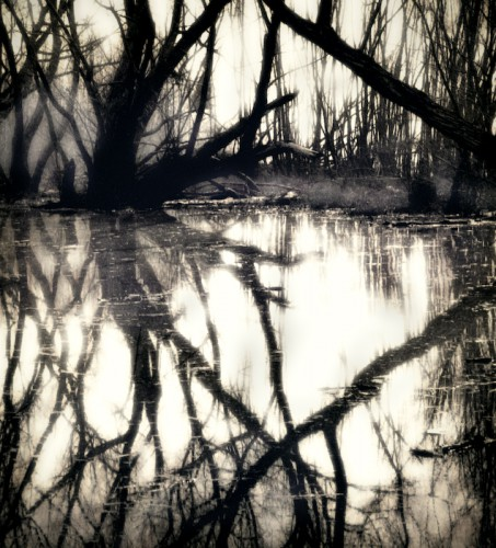Victoria Ryan Swamp_Reflections.jpg