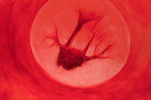 JEN LEWIS Beauty in blood the-perfect-cell.jpg