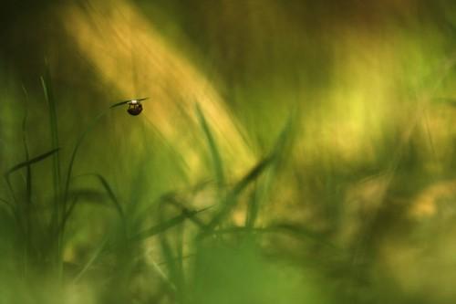 marcin sacha grass 3.jpg