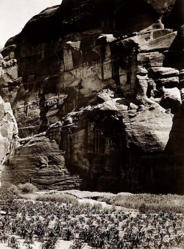 Edward S. Curtis Navaho Cornfields Cantildeon Del Muerto 1906.jpg