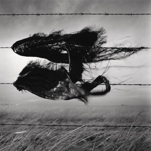 Wes Bell.jpg