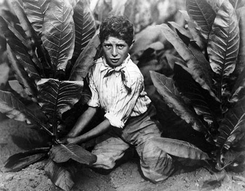 Lewis Wickes Hine Tobacco Field 1916.jpg