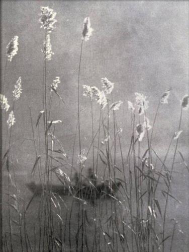 Unattributed • Wild flowers growing on the banks of a pond, n.d.n.jpg