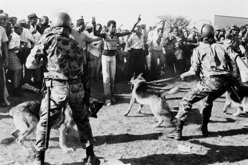 Noel Watson Security forces with dogs hold back a crowd protesting against Minister Piet Koornhof being given the Freedom of Soweto oct 1980 devant Thabo Sefatsa..jpg