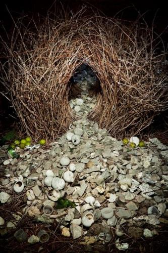 Ingo Arndt -the-grey-decorative-objects.jpg