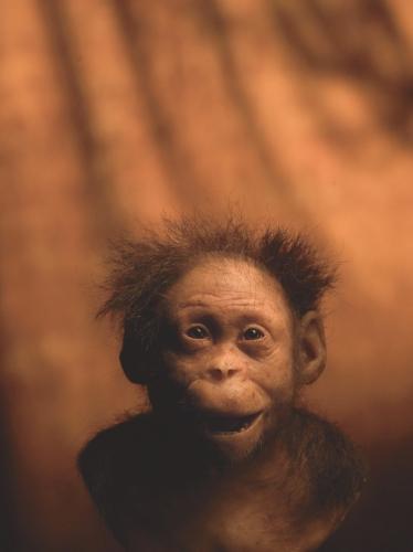Kenis & Kenis Autralopithecus Dikika.jpg