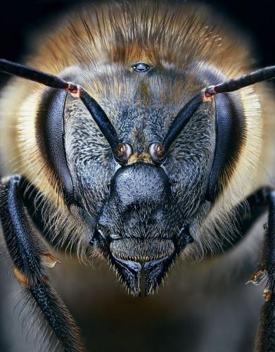 tim flach-abeille20-005.jpg