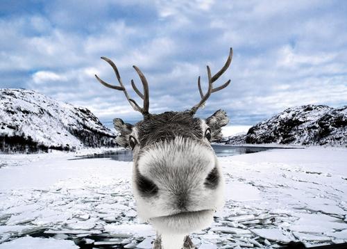 Konstantino Hatzisarros Reindeer in snow ..jpg
