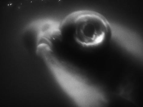 henry horenstein-bulging-eyes-of-goldfish.jpg