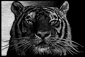 barry moser tiger.jpg