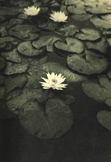 ALVIN LANGDON coburn The Intelligence of Flowers, 1907.jpg