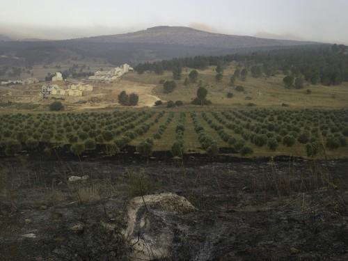 shai_kremer  Burned olive trees and Katyusha crater, Lebanon War.07.jpg