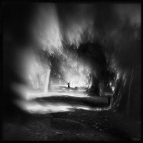 Susan Burnstine Forest through the trees.jpg