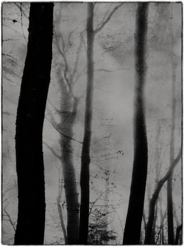 Etienne Cabran No death, no love.jpg
