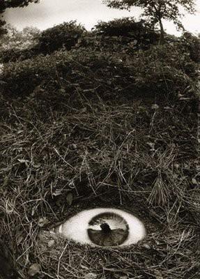 Joan Fontcuberta.jpg