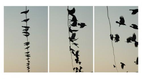 megan gould crow-triptych.jpg