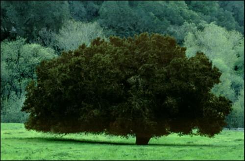 Frank Horvat portrait d'arbres.jpg