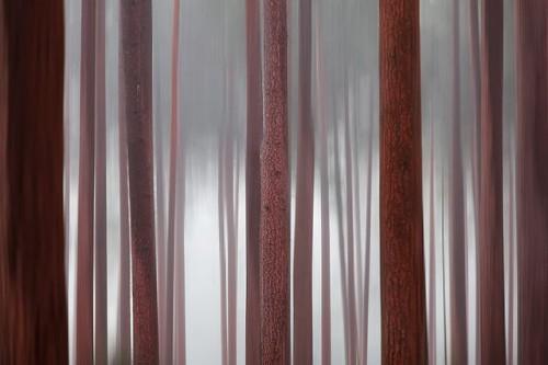 David Baker -trees6.jpg