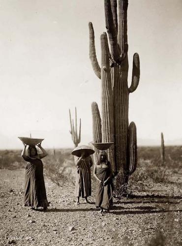 Edward S. Curtis Maricopa Tribe 1907 Saguaro-Gatherers.jpg