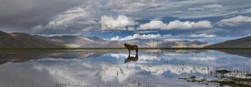 phil borges préfecture de shannan tibet .jpg
