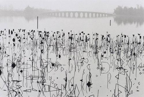 fleurs de lotus fanés sur le lac Kunning, à Pékin. Photo de René Burri (1964). n.jpg