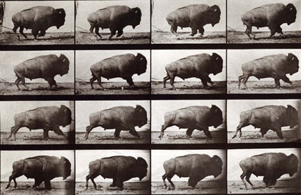 EADWEARD MUYBRIDGE Animal Locomotion, Plate 700, 1887. .jpg