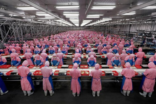 Edward-Burtynsky Deda Chicken Processing Plant, Dehui City, Jilin Province, China, 2005.jpg