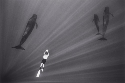 wayne levin FreediverSwimmingwithPilotWhalesW21.jpg