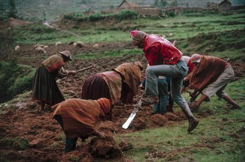 Stuart Franklin 1991 PERU. Near Cuzco. Planting potato .jpg