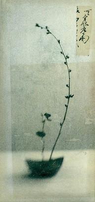 elena ray 2.jpg