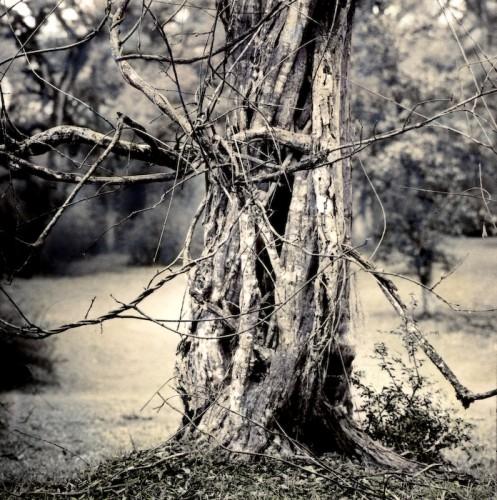 Victoria Ryan Tree_Web.jpg