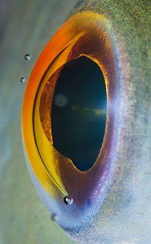 Suren Manvelyan fish eye 3.jpg