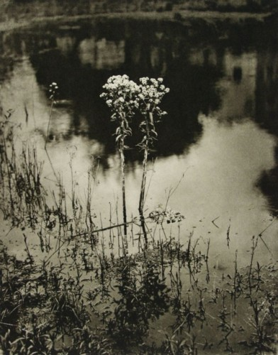 Adolf Fassbender - Weed Beauty, 1937.0.jpg