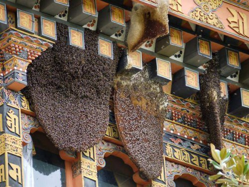 Maddy Harland Monastery Bees in Bhutan.jpg