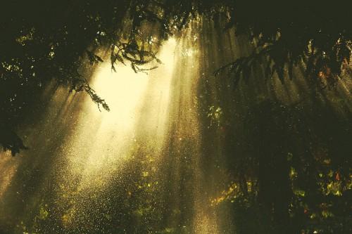 Tin Davis golden light 5.jpg