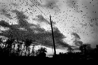 paolo pellegrin Kosovo, Town of Pristina, Crows over Cemetery (2000) .jpg
