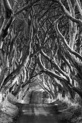 Janet Wippell The Dark Hedges Northern Ireland.jpg
