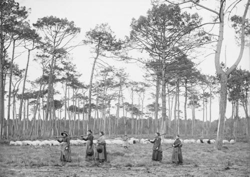 Félix Arnaudin Lüe pins lilere 21 janvier 1892.jpg