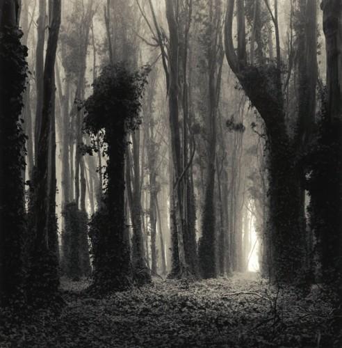 william scott  Eucalyptus Grove, California, 1996.jpg