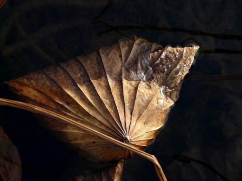 raphaële colombi lotus sacrés 11.jpg