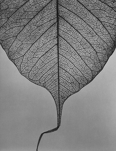 Edward Dimsdale leaf autumn 2002.jpg