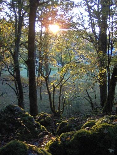 couchant forêt 3.JPG